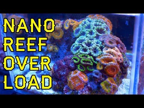 NANO REEF OVERLOAD!! Five Great Nano & Pico Reefs At Elite Reef