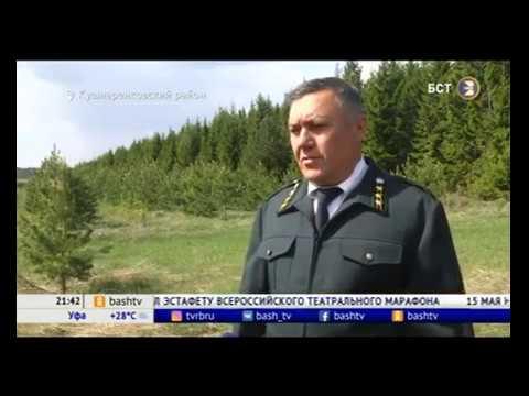 Башкирия за 5 лет получит более 2 млрд рублей на восстановление лесов