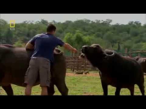 Lindsay Hunt – Buffalo Warrior (End)