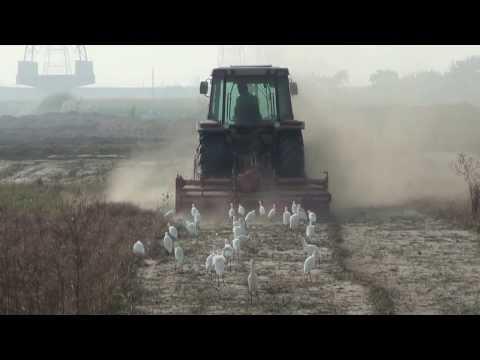 耕耘機與鷺鷥的田園交響曲20131210 - YouTube