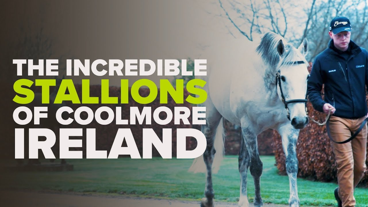 Meet The Coolmore Stallions - Galileo, Fastnet Rock & More