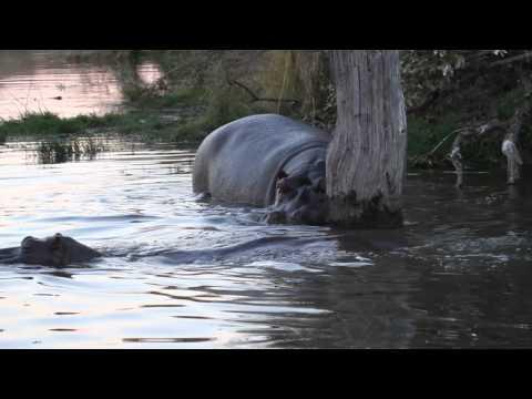 Kruger Park Big 5 in 3 days