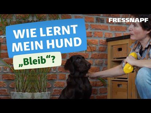 Hundekommando: Bleib | Wir zeigen euch wie es geht