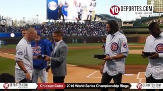 Jason Hammel, Travis Wood and Jorge Soler receive World Series Rings