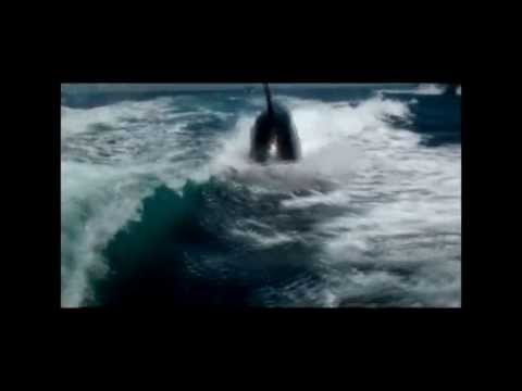 Couple's Amazing Close Encounter With Surfing Kill