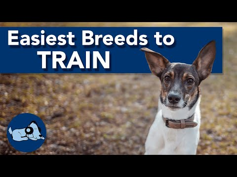 Top 5 Easiest Dog Breeds to Train!