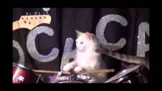 FRANK ZAPPA  --  YO CATS