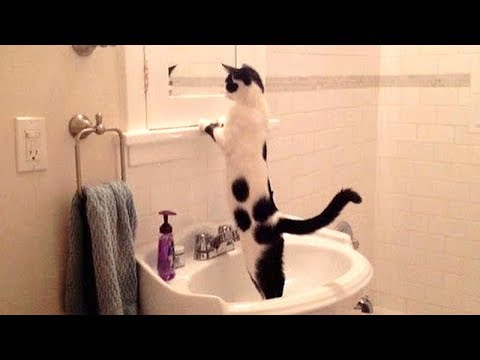 NOW is TIME TO LAUGH! - Super funny DOGS. CATS & BIRDS