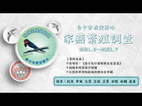 2021 家燕繁殖調查報告-台中市長安國小