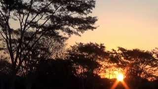 O canto do inhambu chororó, Crypturellus parvirostris, Por do sol,