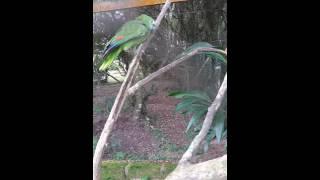 """Papagaio diz """"Oi, nega!"""", dá risada e faz """"fiu-fiu"""""""