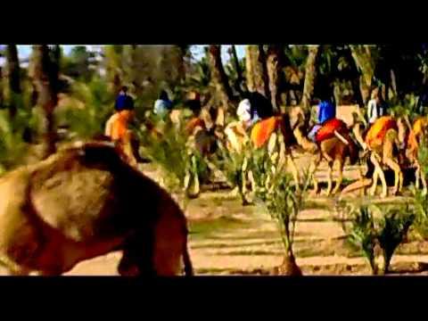 CAMELS!!!!