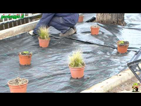 Come preparare un 39 aiuola nel proprio giardino fai da te - Realizzare un giardino ...