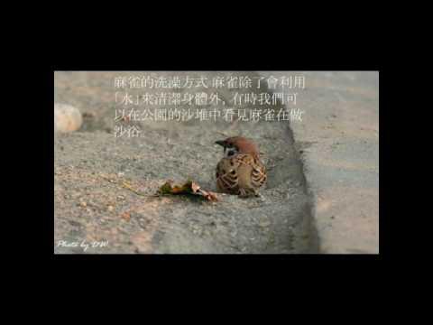 校園生態筆記~麻雀