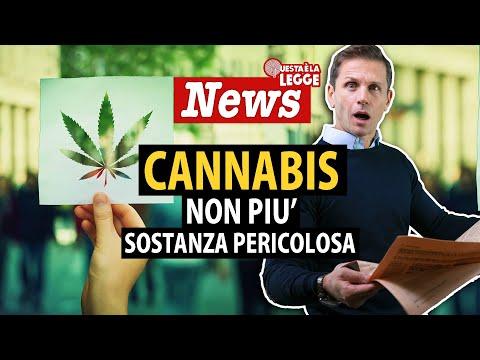 CANNABIS non più tra le sostanze pericolose | avv. Angelo Greco