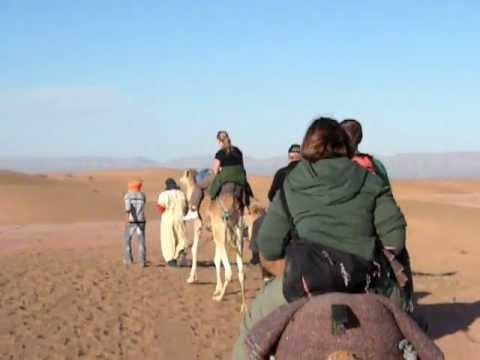 Bumpy Camel Ride!