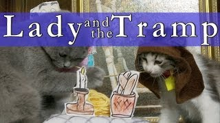 Walt Disney's Lady and the Tramp (Cute Kitten Version)