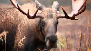 Irvin Blais-L'temps d'la chasse