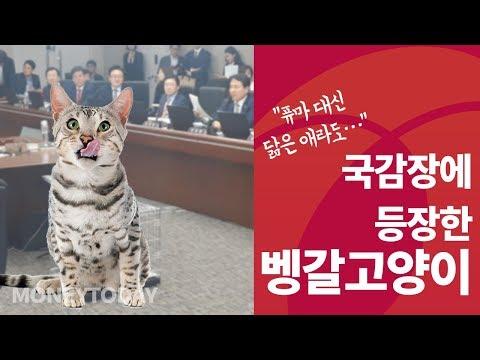 """""""퓨마가 불쌍해""""… 국감장에 벵갈고양이 데려온 이유"""