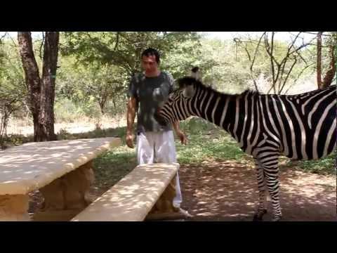 Zebra's paradise in Marloth Park