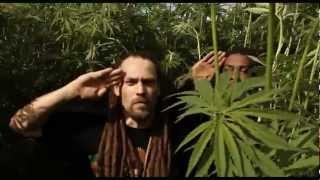 CANNABIS POSITIV YOUNG LION