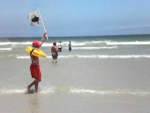 shark alert muizenberg beach south africa.AVI