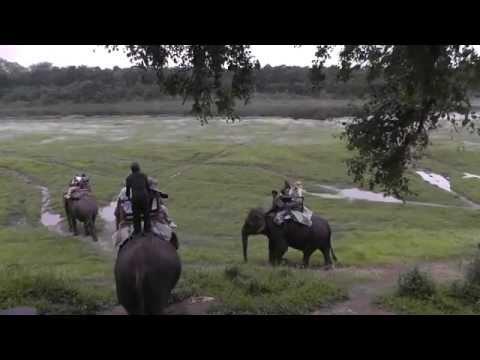 Elephant Trek in search of Rhinos, Chitwan Nat'l Park, Nepal