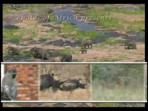 Kruger National Park – South Africa Travel Channel 24