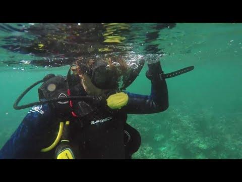 Jobb som frivillig med marint konserveringsarbeid på Seychellene!