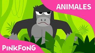 El Bugui de La Selva | Animales | PINKFONG Canciones Infantiles