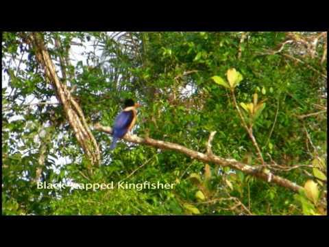Sensational Sundarbans of Bangladesh – Part 1