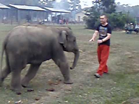 Playing with a Baby Elephant, Chitwan National Park Nepal