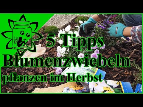 Blumenzwiebeln richtig pflanzen im Herbst | Frühlingsblüher im Garten | 5 Tipps zum Zwiebeln setzen