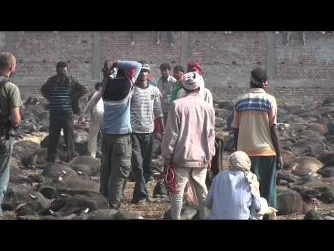 Gadhimai Festival – Hold Still Please (www.travelyourassoff.com)