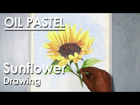 How to Draw Sunflower in Oil Pastel step by step