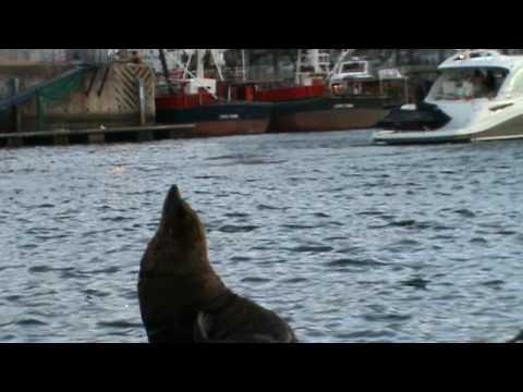 Un simpatico incontro con delle foche al porto di Città del Capo