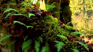 Relaxing Video - Sounds of Nature - Spa and Anti-Stress Video