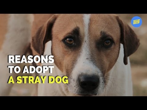 ScoopWhoop: Reasons To Adopt A Stray Dog