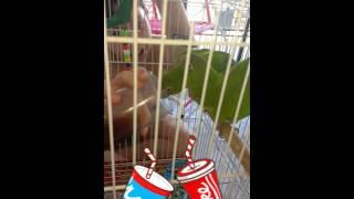 Zezinho e Rosinha tomando Coca Cola no domingo quente!!!
