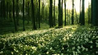Горо зелена - Илия Аргиров