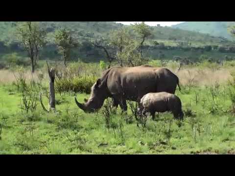 pilanesburg animals