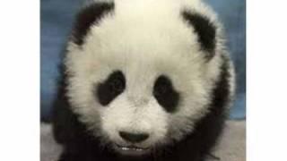 FELIZ NIVER DO AMIGO PANDA
