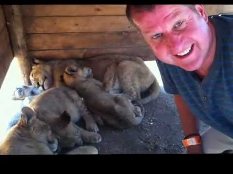 Peter Rosenfeld DinkyGuide plays with lion cubs at Lion Park, Johannesburg, South Africa