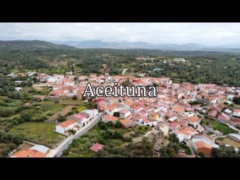 Video presentación Aceituna
