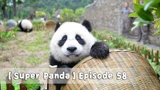 【Super Panda】Episode 58   iPanda