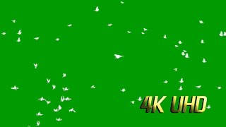 4K Flying Bird Green Screen 5Types Flying Pigeon Green Screen.