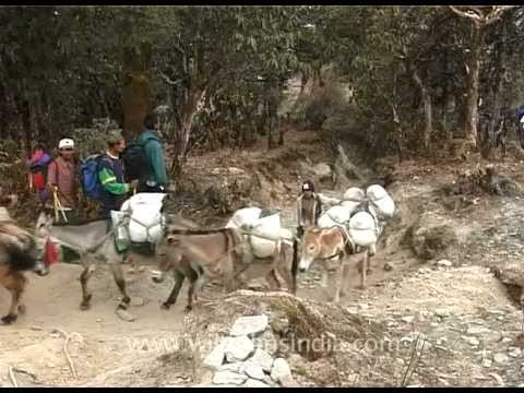 Pack of mules – The little porters on the way to Mt. Everest!