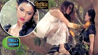 Sesha Dead After Morni Attacked Her? | Naagin | Colors width=