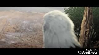 Assasin's Creed'e Dirilis Ertugrul Muzigi Koyulursa