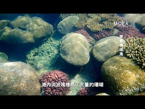 水面下的生態 @永安液化天然氣接收站
